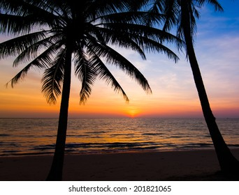 sunset on the beach. Palm trees silhouette on sunset tropical beach