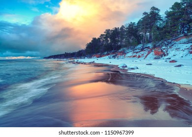 Sunset on the beach with pines of the Baltic