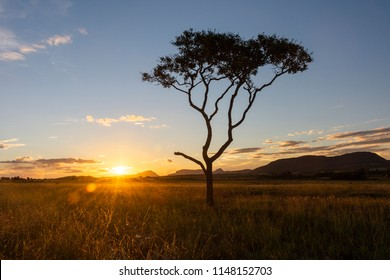 Sunset on a beautiful cerrado vegetation landscape with one single lonely tree silhouette, Chapada dos Veadeiros, Goias, central Brazil