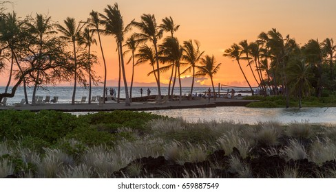 sunset on Big Island of Hawaii near Waikoloa. Grasses swaying in wind in foreground, fishpond in mid ground, palm trees with orange and gold sunset in distance