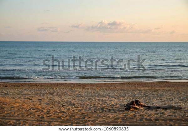 Sunset on the Black Sea coast. A log on the beach
