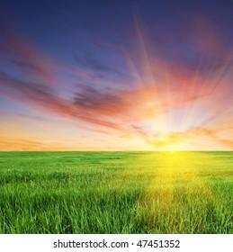 sunset on a boundless fields