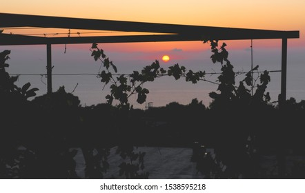 Sunset on Capri with wine grapes in foreground