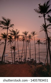 Sunset on coconut hill in Mirissa, Sri Lanka