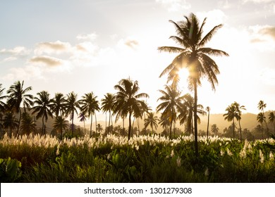 Sunset on coconut and sugar canne plantation near Achada Fazenda in Santiago Island  in Cape Verde - Cabo Verde