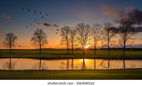 Sunset on a country meadow and pond with trees and flying water fowl