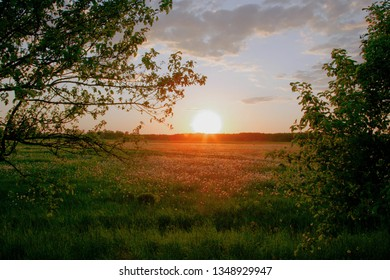Sunset on dandelion meadows with trees in the foreground