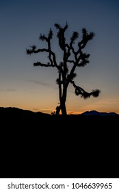 Sunset on the desert landscape in Joshua Tree National Park, California