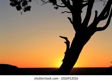 sunset on desert, silhouette tree