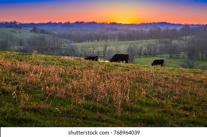 Sunset on Farm with Cows