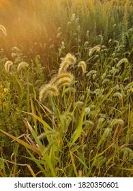 Sunset on the field grass