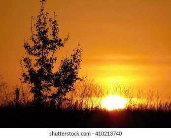 Sunset on the field near Kiev in Ukraine