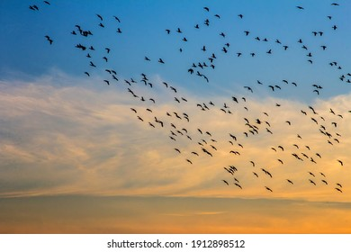 Sunset on Lake with a rush of birds