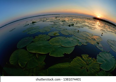 Sunset on the lake with water lillies leaves floating and curved horizon line, blue sky and sun in the background