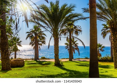 Sunset on the Mediterranean Sea. Picturesque climatic cabin in a palm grove around an expensive hotel. The concept of luxury holiday seashore