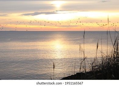 Sunset on ocean and birds