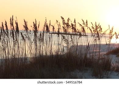 sunset on orange beach alabama yellow sun through sea oats