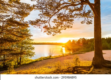Sunset on a sandy beach in a pine forest near the village