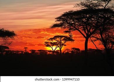 The Sunset on savanna, Africa