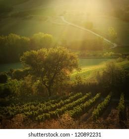 Sunset on Tuscany vineyards, Italy | late September