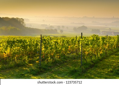 Sunset on a vineyard
