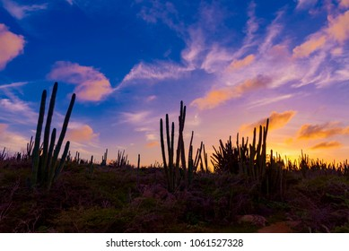 sunset on the wild forest of Cactus plants in the remote and deserted island of Aruba pearl of the Caribbean sea