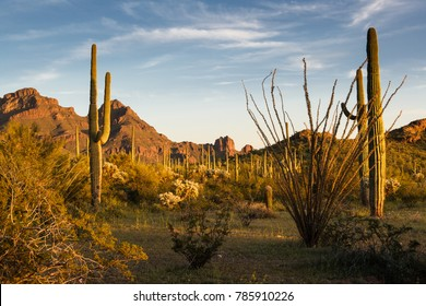 Sunset at Organ Pipe Cactus National Monument Arizona USA