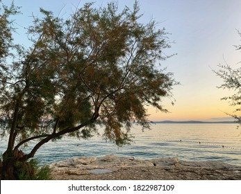sunset over the Adriatic Sea in Split, Croatia with olive tree