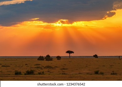 Sunset over the African savannah