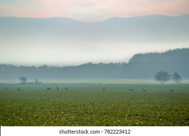 Sunset over agricultural fields. The fields are grazing deers. In the background fog and silhouettes of mountains Slovakia, Europe.