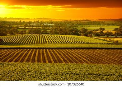 Sunset over Barossa Valley vineyards South Australia
