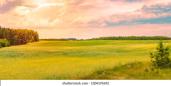 Sunset over beautiful field with green grass. Sky and clouds in background. Dramatic scenery in Belarus.