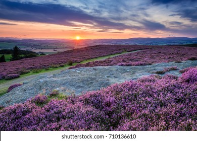 Sunset over Cheviot Hills and Rothbury Heather / Rothbury Terraces walk offers views over the Coquet Valley to the Simonside and Cheviot Hills, heather covers the hillside in summer