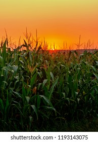 Sunset over a corn field in Silesia in Poland