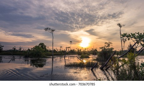 Sunset over the cypress trees and the swamp