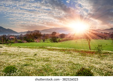 Sunset over daisy field.