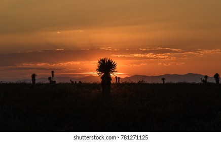 Sunset over desert in the North of Mexico