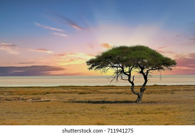 Sunset over the Etosha Pan with a solitary Acacia Tree .  Namibia , Africa