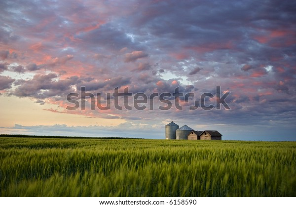Sunset over farm buildings and wheat swaying gently in the evening breeze, Gilbert Plains, Manitoba, Canada
