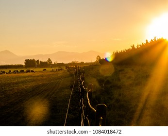 sunset over farm  in new zealand