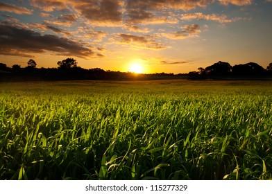 Sunset over field of grass