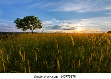 sunset over the field with lonely tree