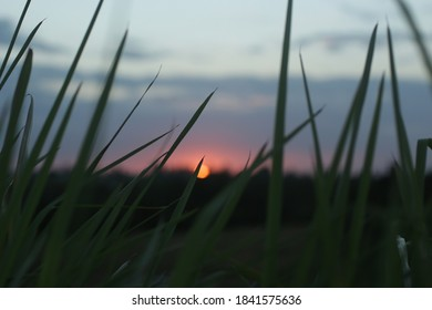 Sunset over the field. Peeking the sun down behind the grass. Sunset sunrise backgrounds. Abstract nature background. Background for inspiration inspirational image concept.