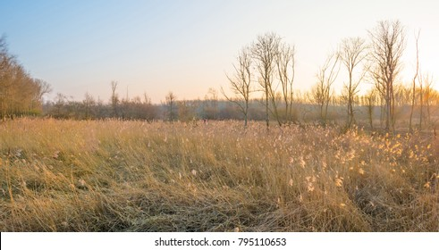 Sunset over a field with reed in winter