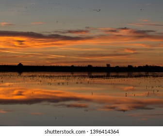 Sunset over Flooded Field Birds in Air