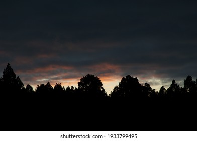 Sunset over a forest of Canary Island pine Pinus canariensis. El Paso. La Palma. Canary Islands. Spain.