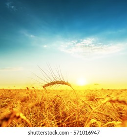 sunset over golden field with harvest