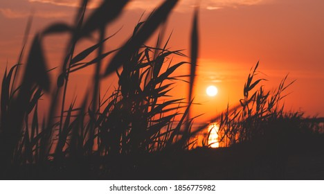 Sunset over Gulf of Finland, summer evening landscape photo with coastal reed silhouettes