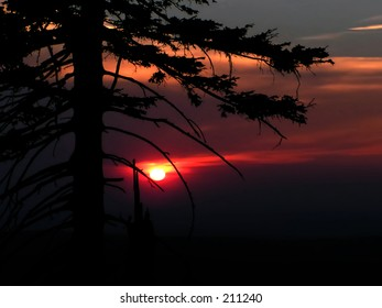 sunset over hills with a tree left side
