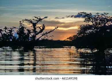 Sunset over the Laguna Grande, silhouetting a flooded jungle, in the Cuyabeno Wildlife Reserve